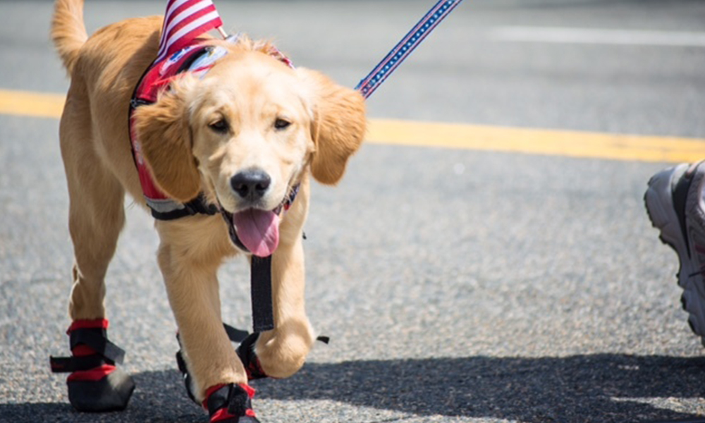 Aug List Puppyblock