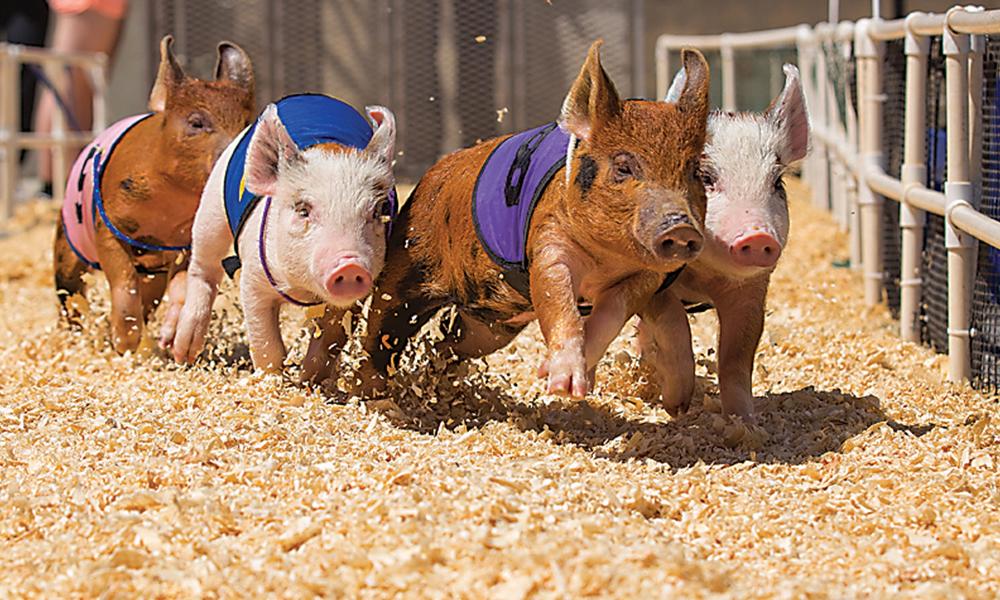 Sep List Pig