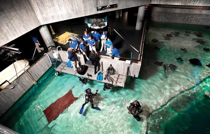 659-2010-05-Aquarium-divers