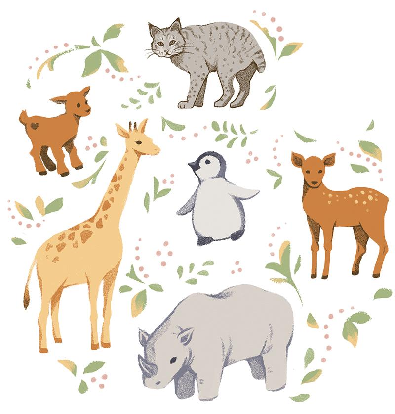 Animal Kingdom Illo