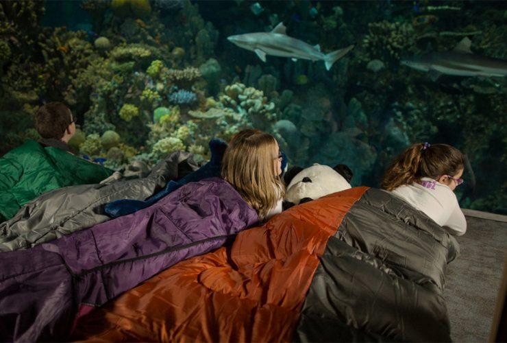 Events Shark Sleepover