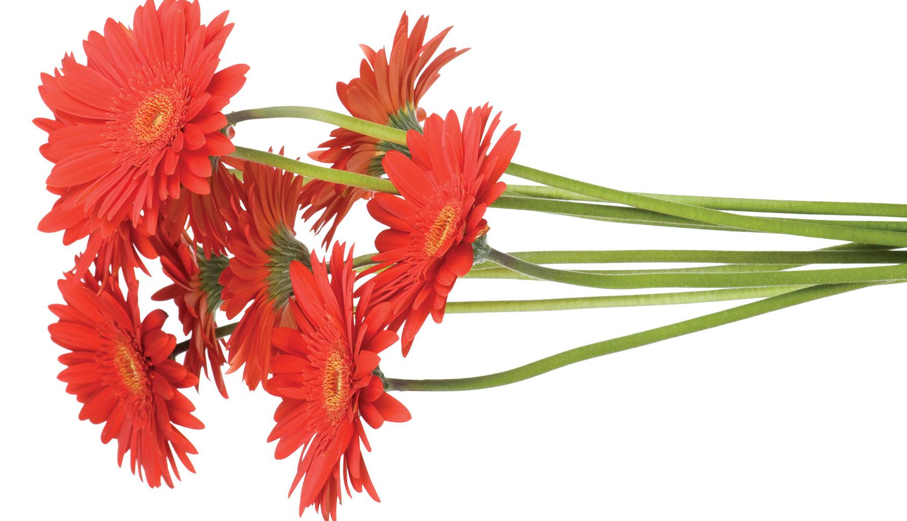 flowers_CLIP4.jpg#asset:42806