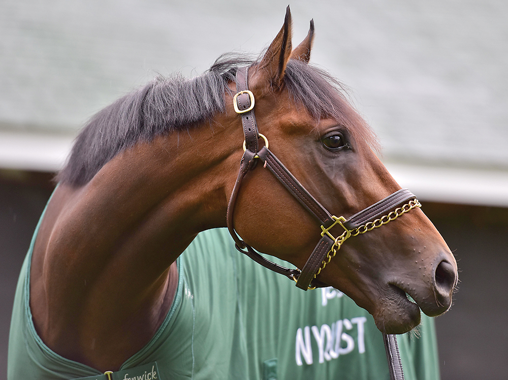 Horse Opener