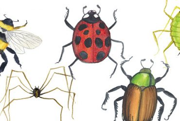 Ladybug And  Beetle  Locopy1
