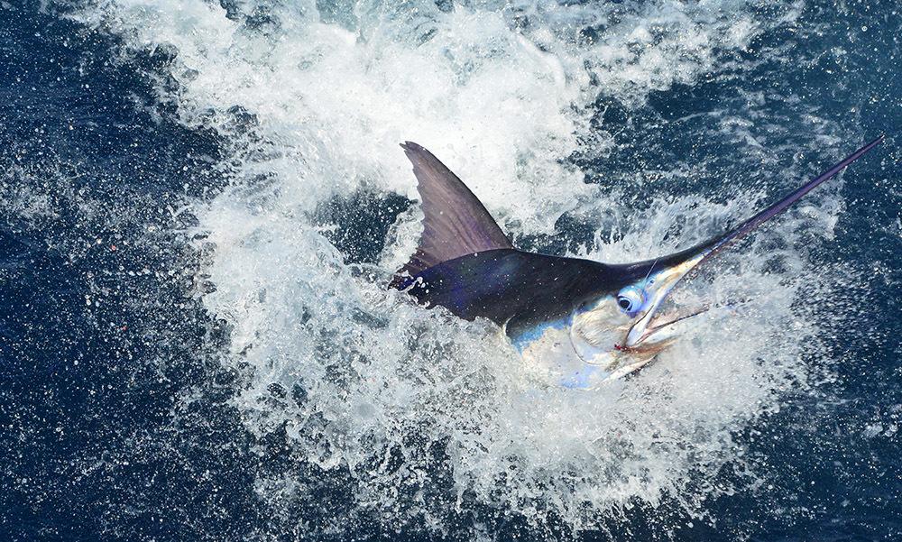 Launch Marlin Open