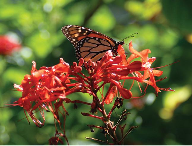 Selby-butterfly-garden.jpg#asset:39571:url