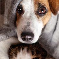 Pet Er Photo