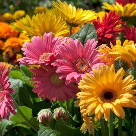 Carroll County Flowers