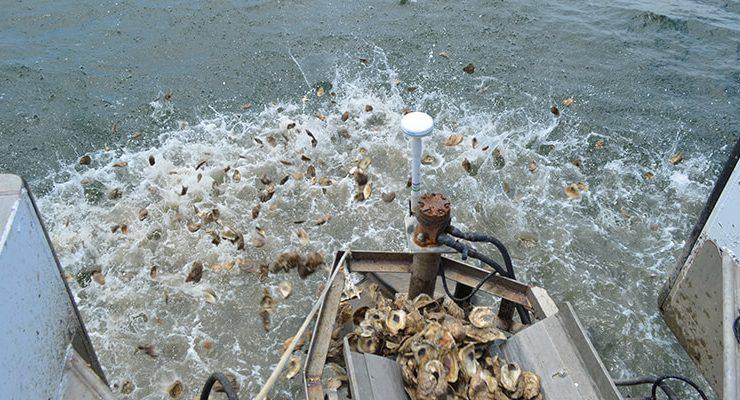 10 Billion Oyster Partnership