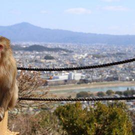 Azumi Japan Monkey Mountain