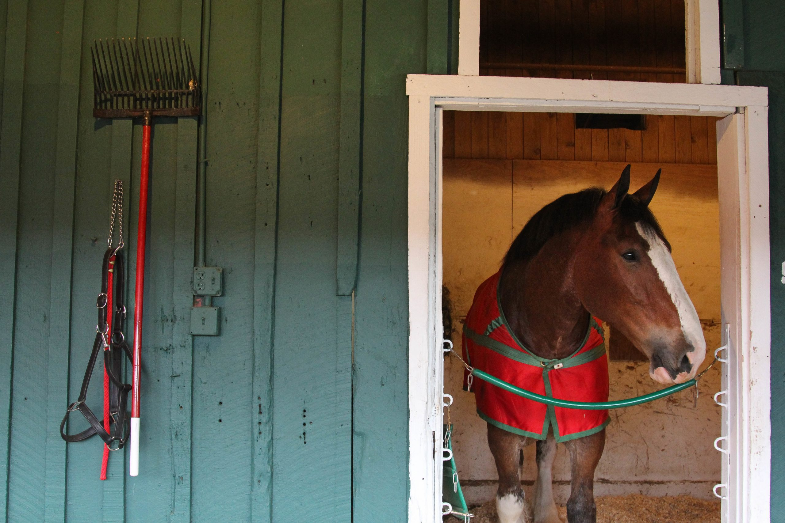 Clydesdale 1
