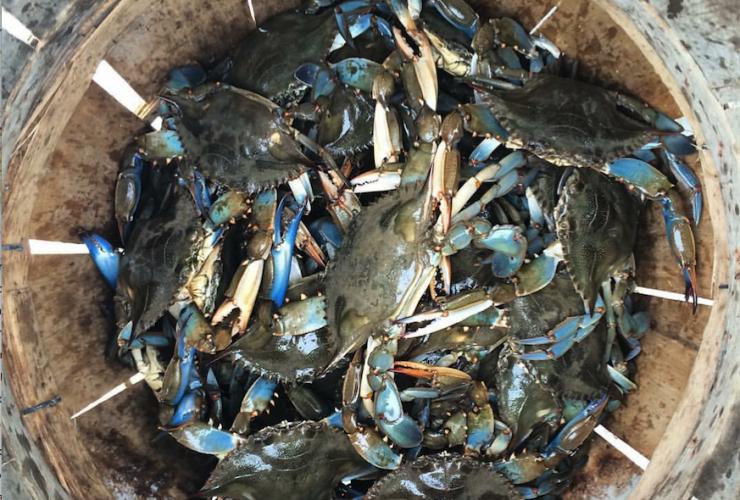 Crab Basket1