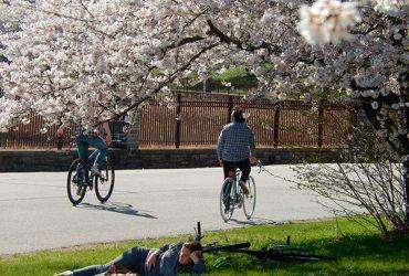 Flowering Tree Trails of Baltimore