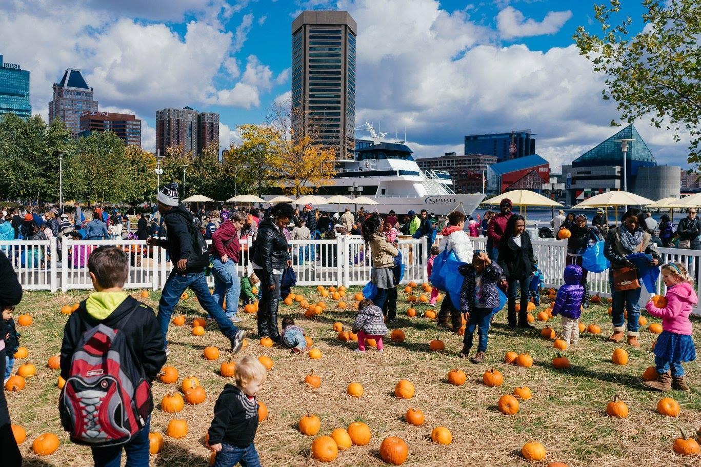 Halloween2016 Harbor Harvest3
