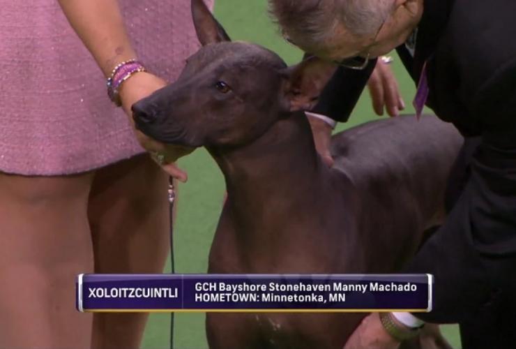 Manny Manchado dog show