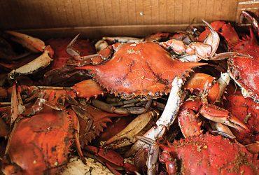 Origins Crab