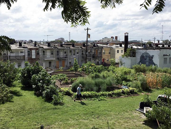 Pigtown Community Garden 720