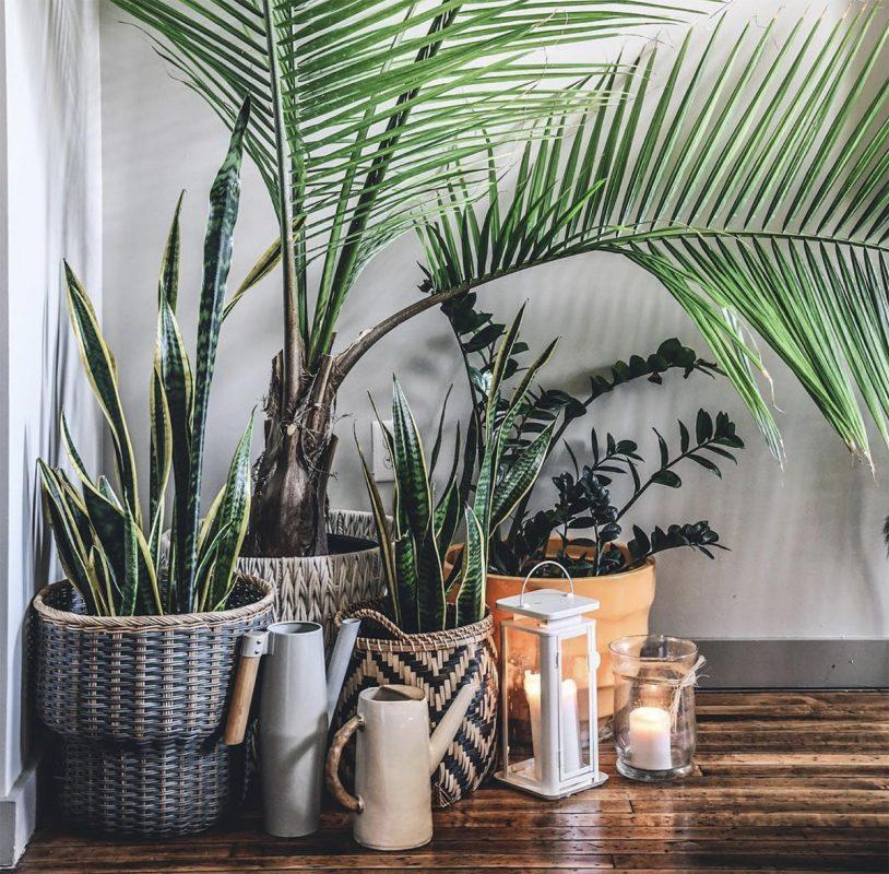 Plant Care Hilton