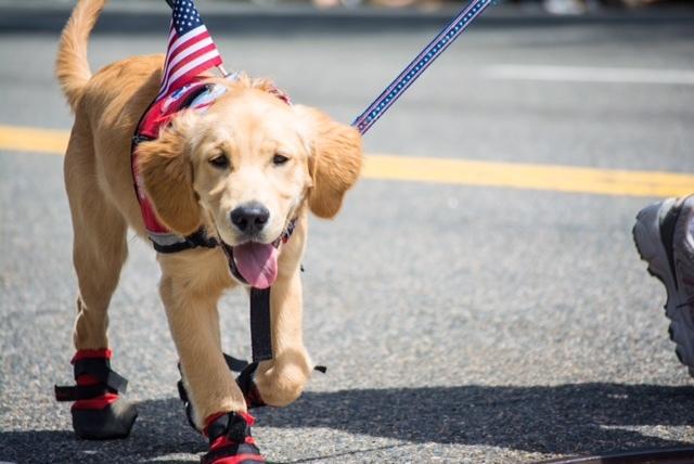 WL Memorial Day Parade Dog