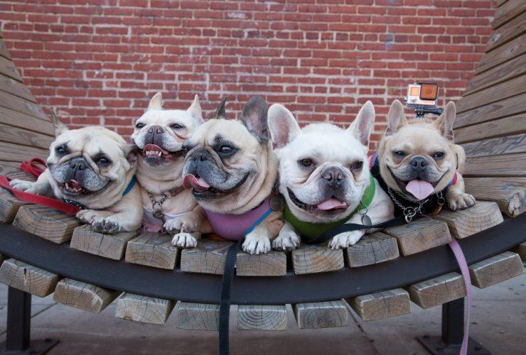 Wl Pups