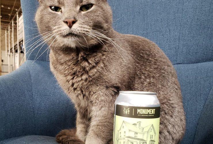 Wl Willow Cat